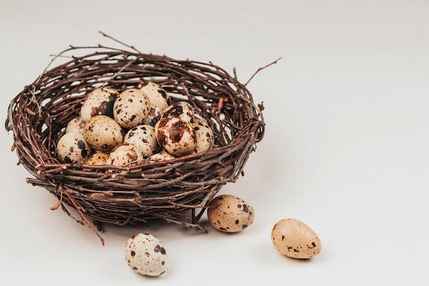 Uova di quaglia in un nido fatto di rami. Foto Premium