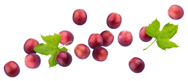 Uva rossa isolata su fondo bianco Foto Premium