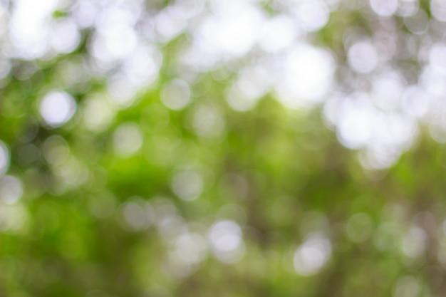 Vago di bokeh verde sul fondo dell'albero Foto Premium