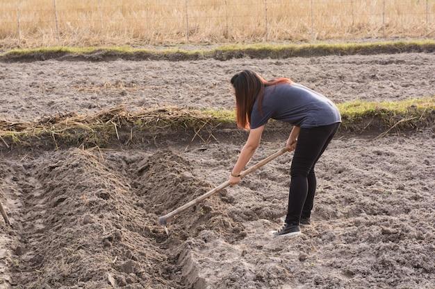 Vanga della tenuta dell'agricoltore della donna al campo nel phanom di nakhon, tailandia Foto Premium