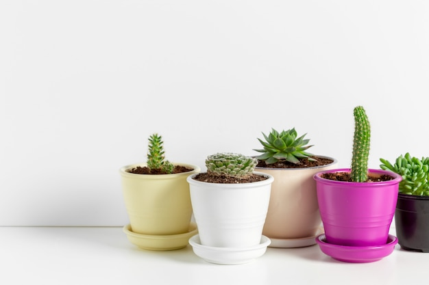 Varietà di piante grasse in diversi vasi Foto Premium