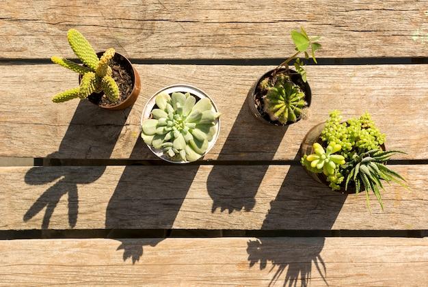 Vasi con piante su fondo in legno Foto Gratuite