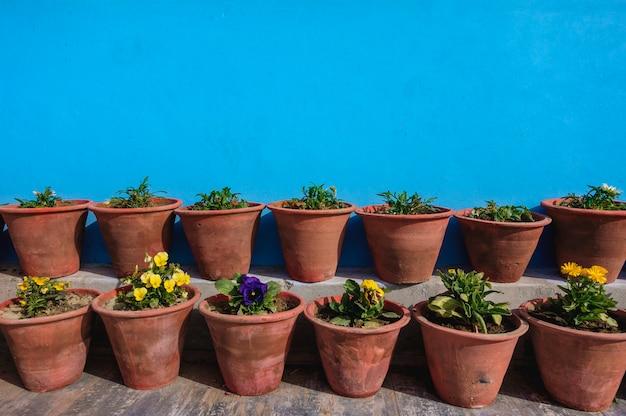 Vasi da fiori con parete blu Foto Gratuite