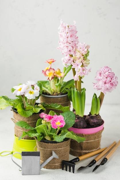 Vasi di fiori di fioritura dell'angolo alto Foto Gratuite