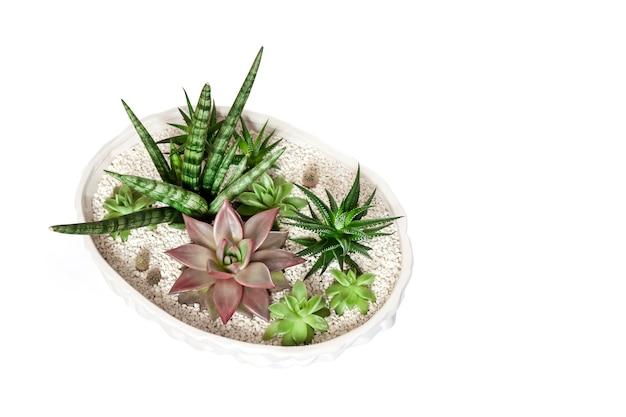 Vaso di fiori bianco ceramico con varietà di piante grasse isolate su superficie bianca Foto Premium