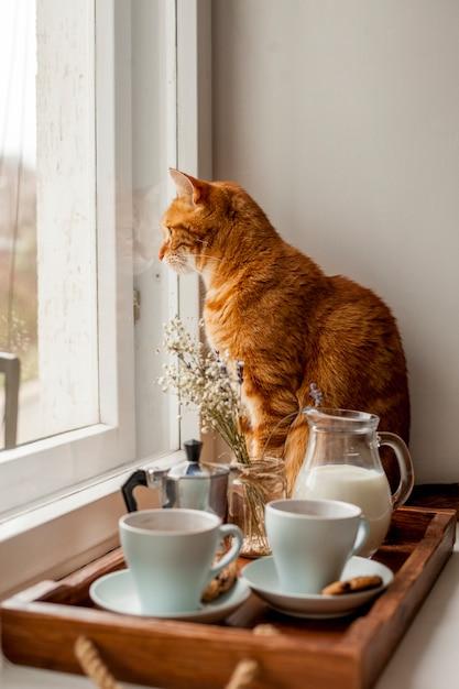 Vassoio della colazione con un gatto Foto Gratuite