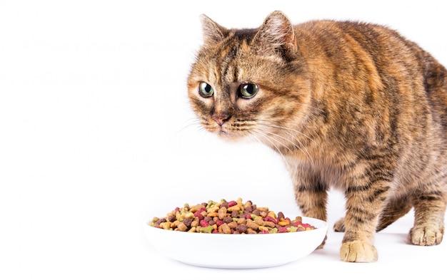 Vecchi gatto domestico e ciotola su fondo bianco Foto Premium