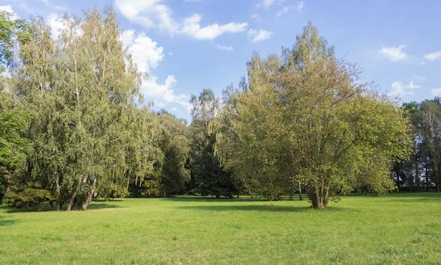 Vecchio parco con prati verdi e grandi alberi. Foto Premium
