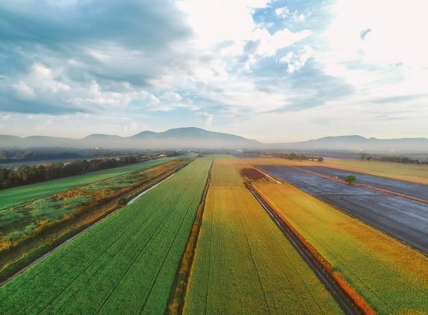 Veduta aerea delle risaie verdi Foto Premium