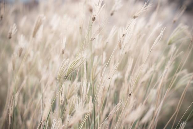 Vento soffiato erba selvatica. foto di stile effetto vintage. Foto Premium