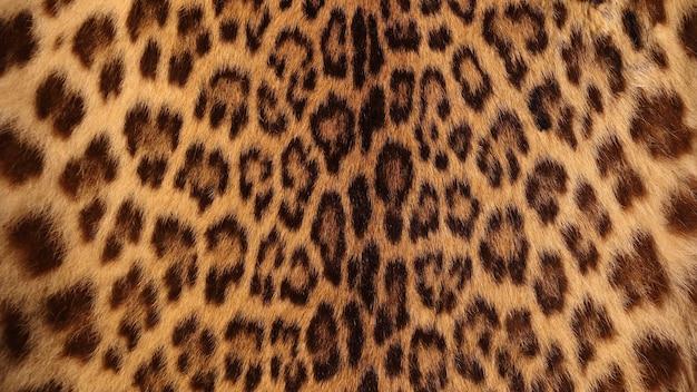 Vera pelliccia di tigre Foto Premium