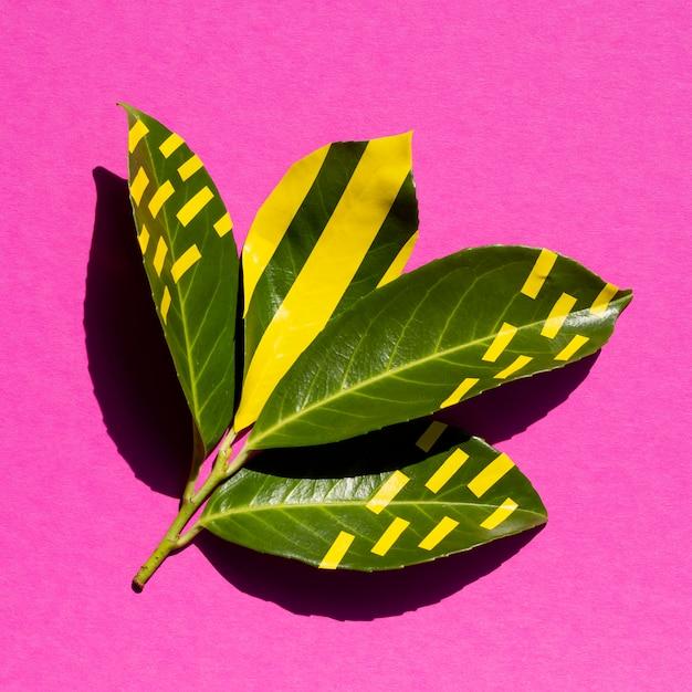 Verde naturale e giallo artificiale su foglie Foto Gratuite