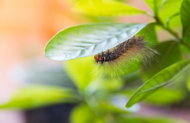 Verme che mangia foglia sul fondo della sfuocatura della foglia verde Foto Premium