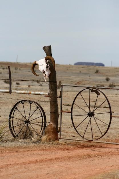 Verticale di un teschio di mucca su una recinzione in una zona desertica nel new mexico Foto Gratuite