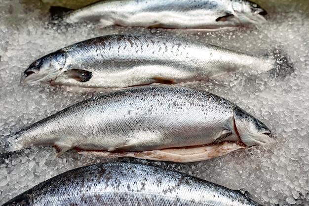 Vetrina con pesce fresco su ghiaccio, storione, beluga, salmone, Foto Premium