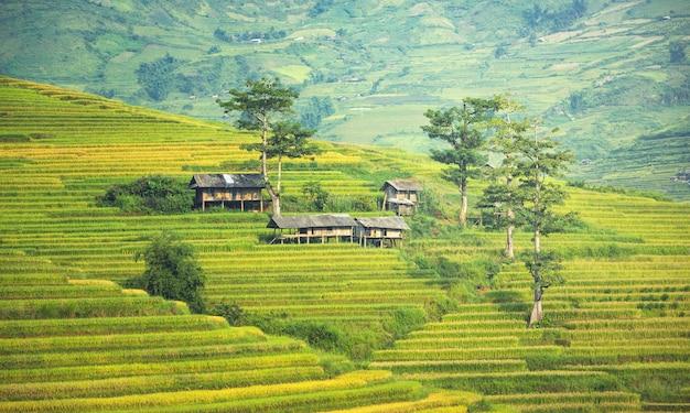 Vietnam. le risaie si preparano per il trapianto a nord-ovest del vietnam Foto Premium