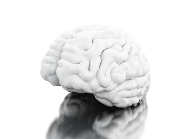 Vista 3d del cervello umano. concetto di anatomia della scienza Foto Premium