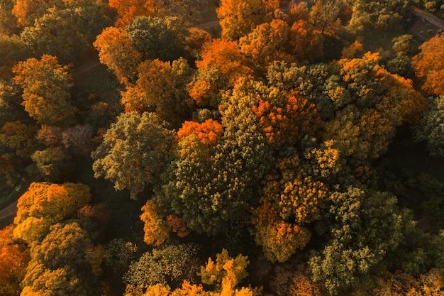 Vista aerea del fuco del paesaggio della foresta di autunno. Foto Premium
