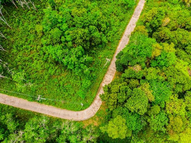 Vista aerea dell'albero nella foresta con la strada Foto Gratuite