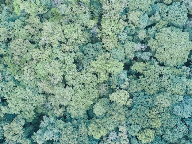 Vista aerea drone foresta verde estate. giornata della terra, protezione dell'ambiente. Foto Premium