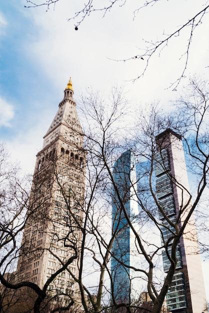 Vista da dietro alberi secchi a edifici alti Foto Gratuite