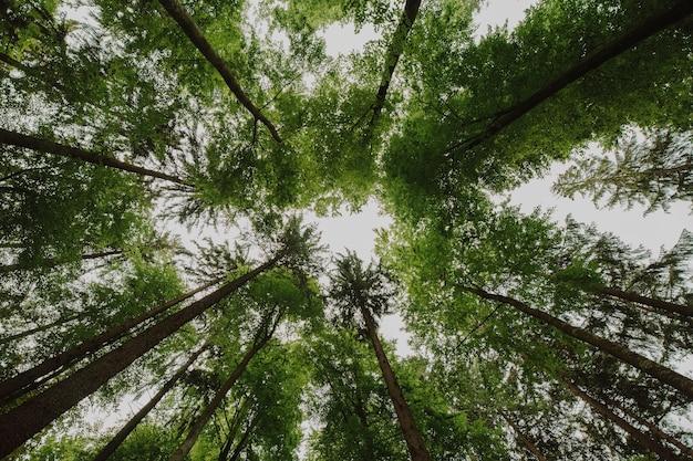 Vista dal basso di un gruppo di alberi Foto Gratuite