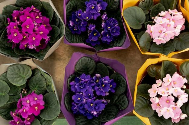 Vista dall'alto con splendidi fiori Foto Gratuite
