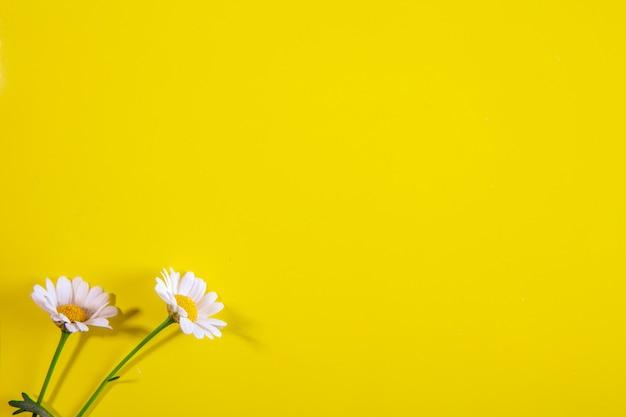 Vista dall'alto copia spazio camomilla su uno sfondo giallo Foto Gratuite