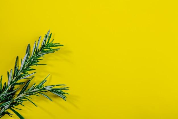 Vista dall'alto copia spazio rami di rosmarino su uno sfondo giallo Foto Gratuite