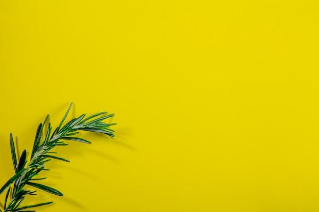 Vista dall'alto copia spazio rosmarino ramo su uno sfondo giallo Foto Gratuite