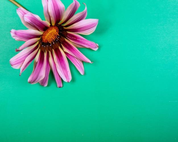 Vista dall'alto copia spazio viola camomilla su uno sfondo verde Foto Gratuite