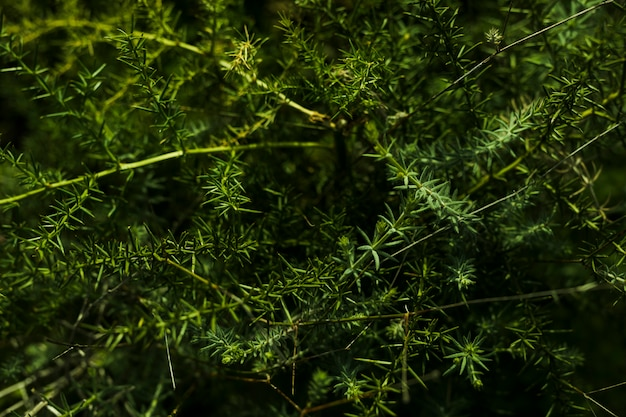 Vista dall'alto della pianta verde Foto Gratuite