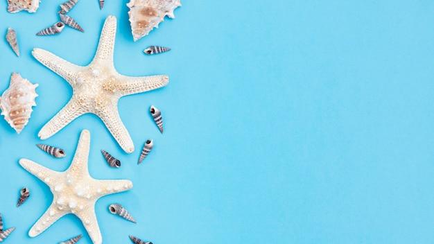 Vista dall'alto di conchiglie e stelle marine con spazio di copia Foto Gratuite