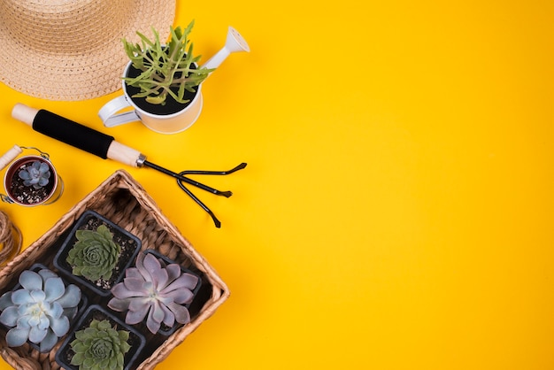 Vista dall'alto di fiori con spazio di copia Foto Gratuite