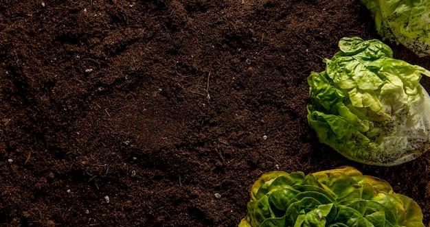 Vista dall'alto di insalata con spazio di copia Foto Gratuite