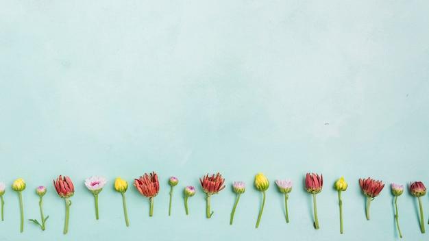 Vista dall'alto di margherite e rose di primavera con spazio di copia Foto Gratuite