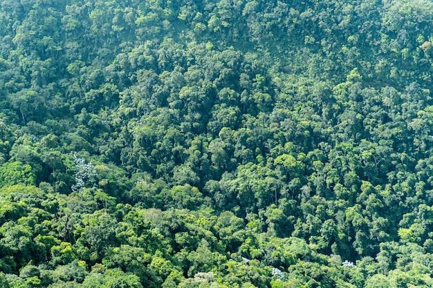 Vista dall'alto di una grande foresta in brasile. texture di vari alberi. Foto Premium