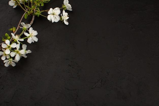 Vista dall'alto fiori bianchi su sfondo scuro Foto Gratuite