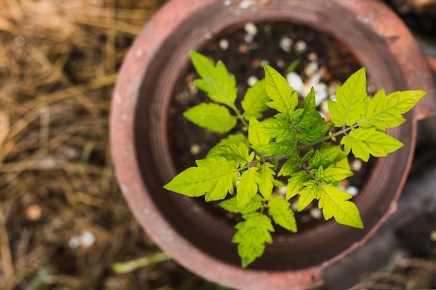Vista dall'alto germinazione delle piante in una pentola Foto Gratuite