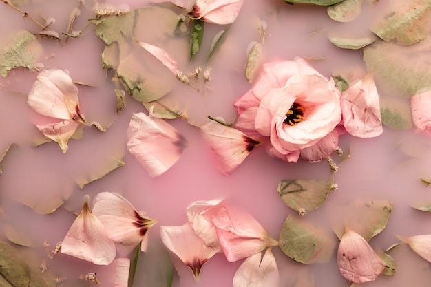 Vista dall'alto rose rosa in acqua rosa Foto Gratuite