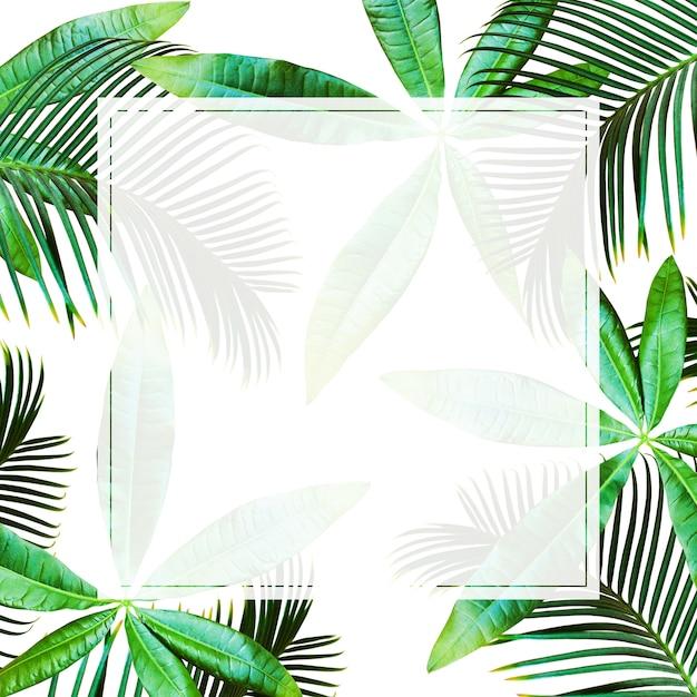 Vista dall'alto sfondo di foglie di palma tropicale Foto Premium