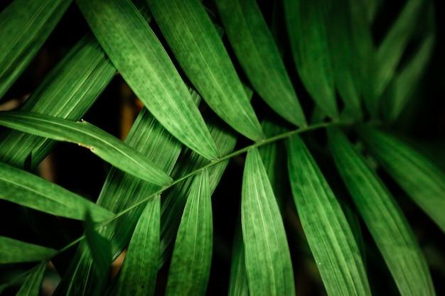 Vista dall'alto verde foglie tropicali Foto Gratuite