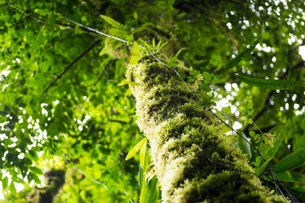Vista di angolo basso del tronco di albero con muschio verde Foto Gratuite
