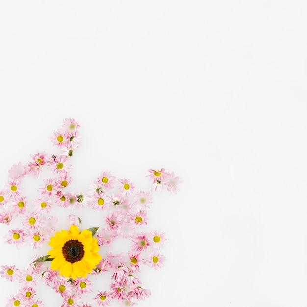 Vista Elevata Del Fiore Giallo E Fiori Rosa Su Sfondo Bianco