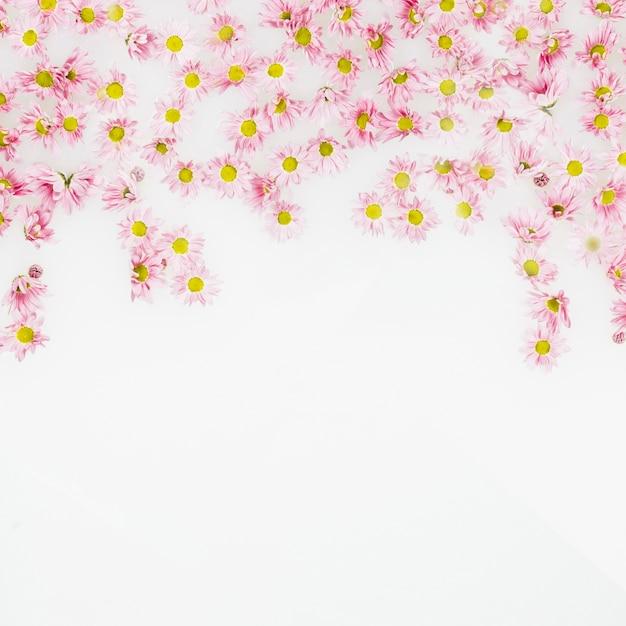 Vista elevata di bei fiori dentellare su priorità bassa bianca Foto Gratuite