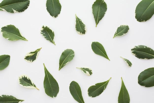 Vista elevata di foglie fresche isolato su sfondo bianco Foto Gratuite