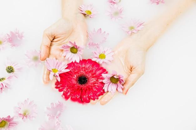 Bagno Lilla E Rosa : Vista elevata di una mano umana che tiene i fiori rossi e rosa in