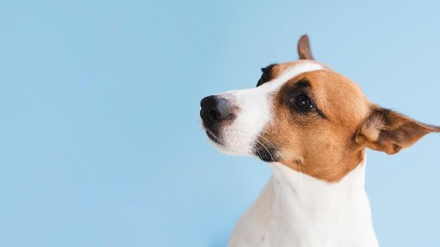 Vista frontale amichevole cane copia-spazio Foto Gratuite