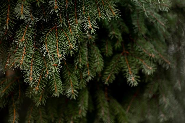 Vista frontale dell'albero di pino verde Foto Gratuite