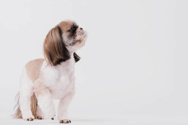 Vista frontale simpatico cagnolino Foto Gratuite